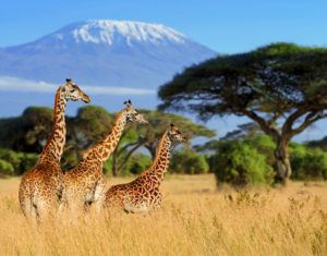 can you climb kilimanjaro without a guide