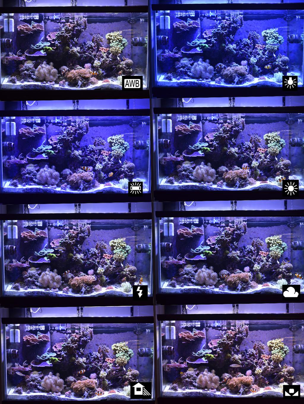 saltwater fish tank setup guide