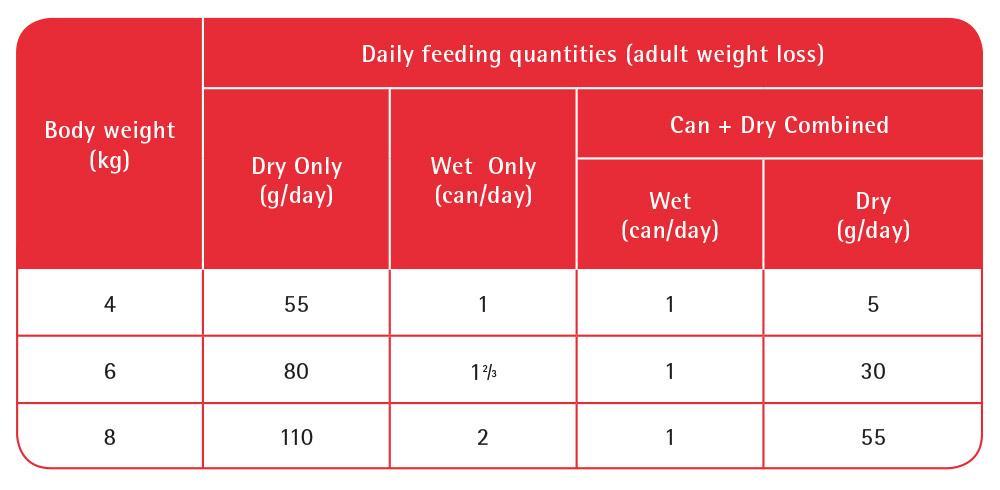 kitten feeding guide wet and dry