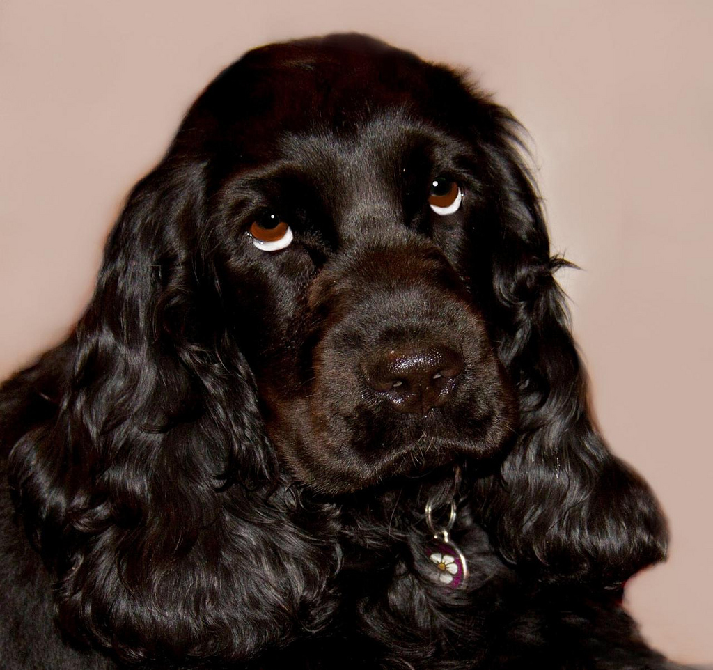 list of guide dog commands