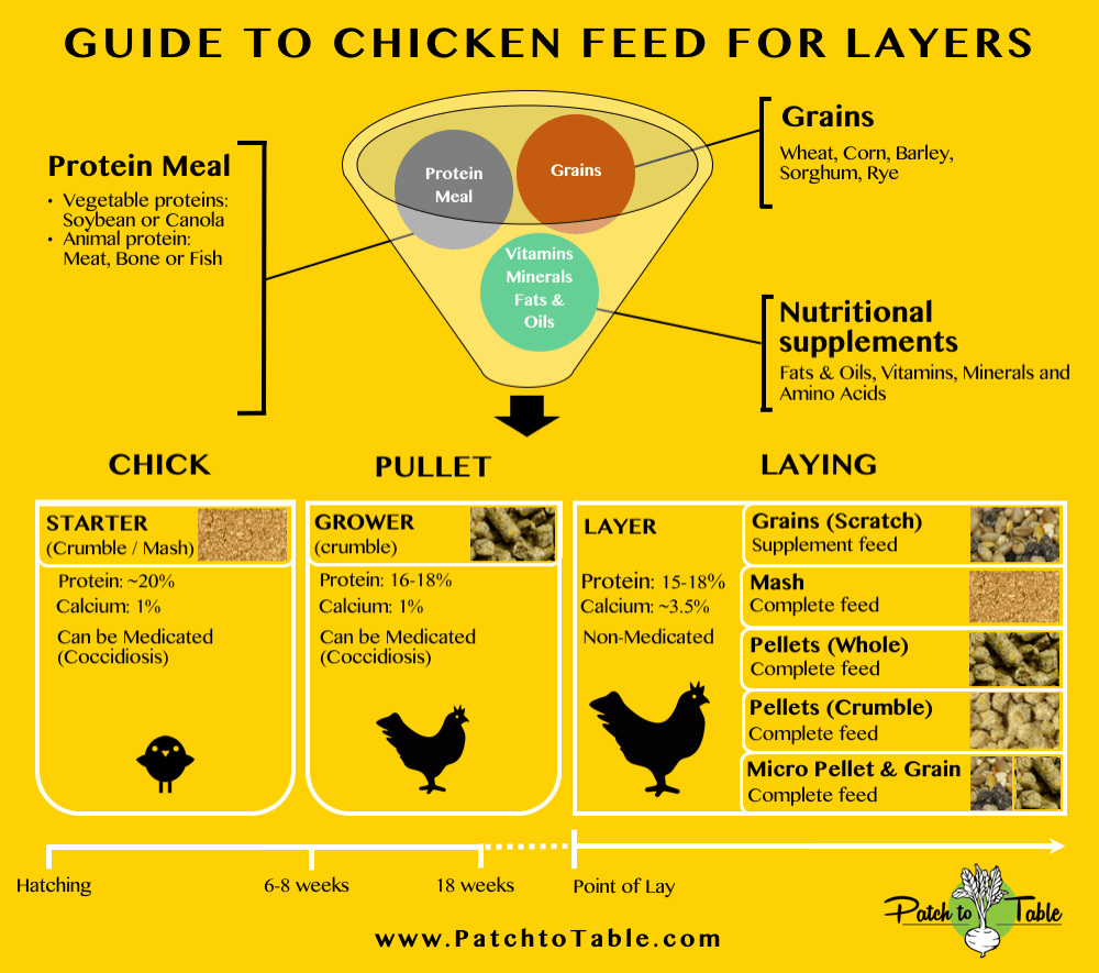 feeding guide for layer chicken